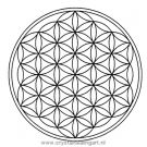 1.14 Levensbloem flower of life fol heilige geometrie sacred geometry dna healing blueprint matrix